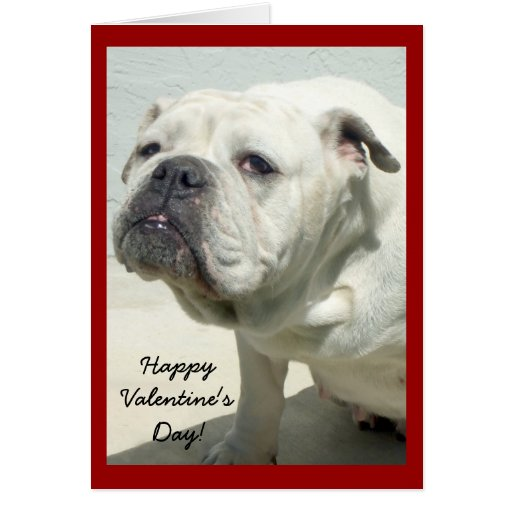 Bulldog Happy Valentines