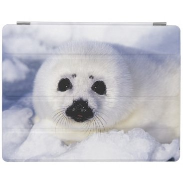 Harp seal pup ice Gulf of St. Lawrence, iPad Smart Cover