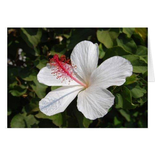 Hawaiian White Hibiscus Card card