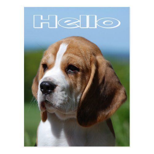 Hello Beagle Puppy Dog Greeting Post Card