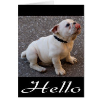 Hello English Bulldog Puppy Dog Blank Note Card