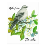 Hello From Florida Mockingbird Orange Blossom Postcard