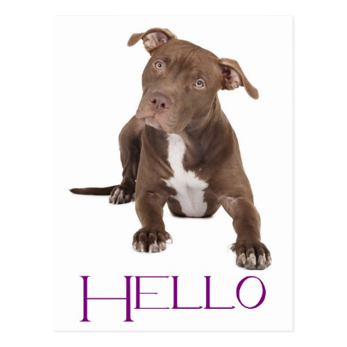 Hello Pit Bull Puppy Dog Blank Postcard