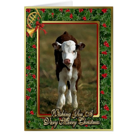 Hereford Calf Cow Blank Christmas Card Zazzle