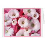 Hibiscus cards