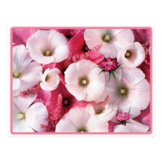 Hibiscus Postcards