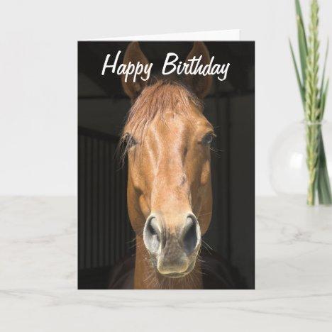 Horse Face Photograph Happy Birthday Card