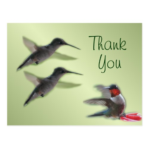 Hummingbird Postcard Thank You or any occasion