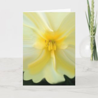 """I Am...""  Yellow Buttercup Greeting Card"