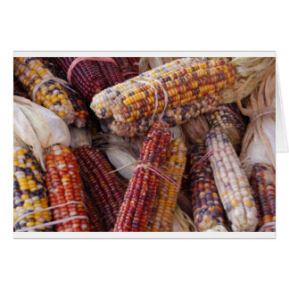 Indian Corn Maize Zea mays Greeting Cards