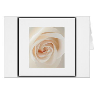 Ivory Rose Greeting Cards