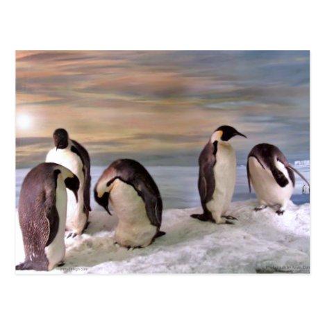King penguins postcard