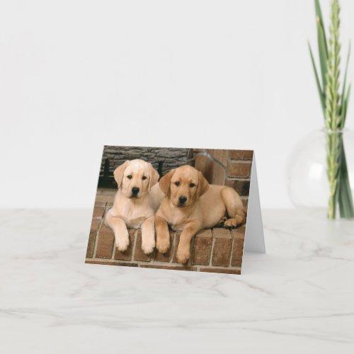 Labrador Retriever Puppy Dogs Note Card