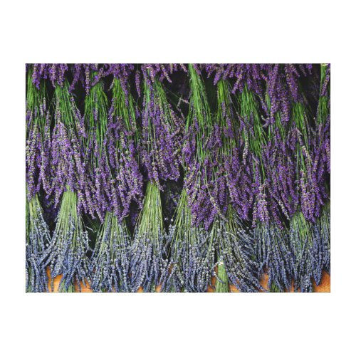 Lavender Bunches on Drying Rack Canvas Print