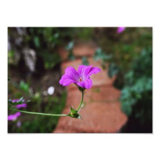 Lavender Flower Photo Print