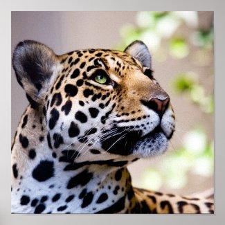 Leopard Photograph print