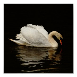 Light In The Dark Swan Print so pretty