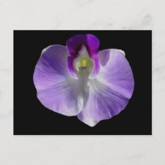 Lilac Orchid Postcard postcard