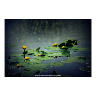 lily pads in the rain at Vernonia Lake Poster