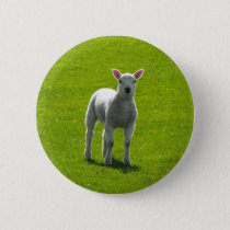 Little Lamb buttons