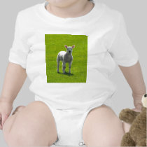 Little Lamb t-shirts