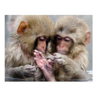 Little monkeys in hot spring, Japan. Postcard