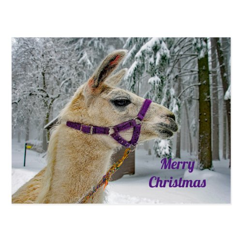 Llama Christmas Postcard