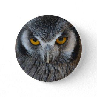 Macro Black and White Owl button