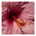 Macro Pink Hibiscus Flower zazzle_print