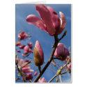 Magnolia zazzle_card