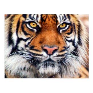 Male Siberian Tiger Postcard