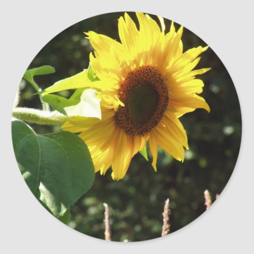maternal sunflower sticker