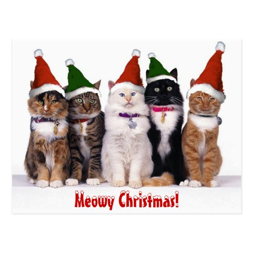 Meowy Christmas Cats Postcard Zazzle