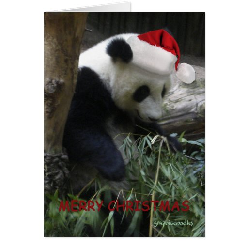 Merry Christmas Panda Happy New Year Greeting Card Zazzle