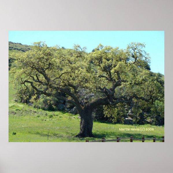 Mighty Live Oak print