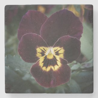 Miniature Pansy Close-Up Photography Stone Beverage Coaster