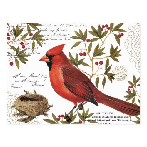 modern vintage winter cardinal postcard