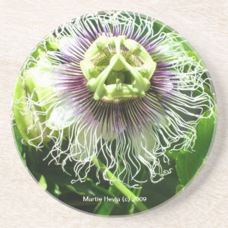Monster Flower - Coaster coaster