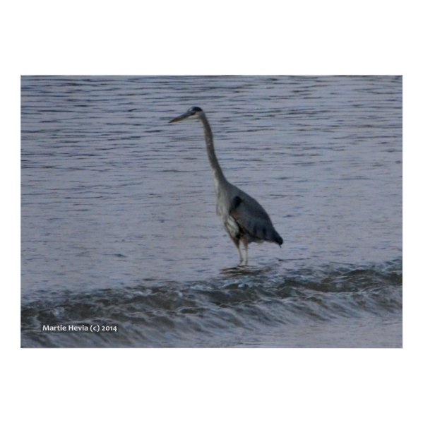 Morning Crane by the Shore