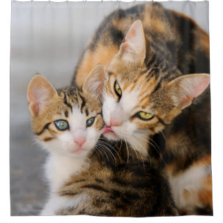 Mother cat loves cute kitten, Tub Shower Curtain