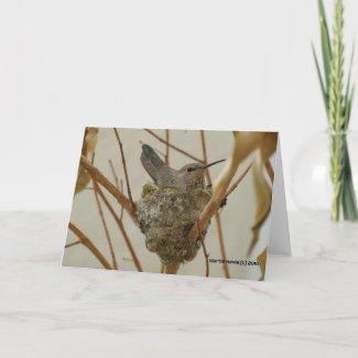 Mother Hummingbird Greeting Cards