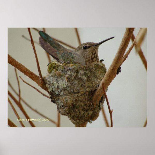 Mother Hummingbird print