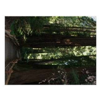 Muir Woods National Monument Poster