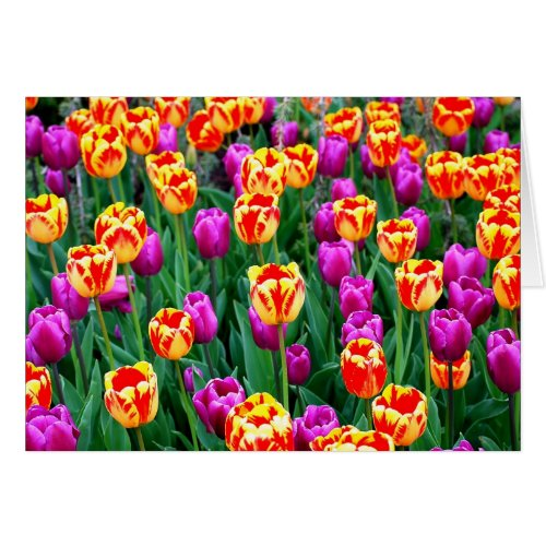 Neon Tulips Card for Any Occasion card