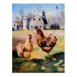Chickens Om The Farm Postcard