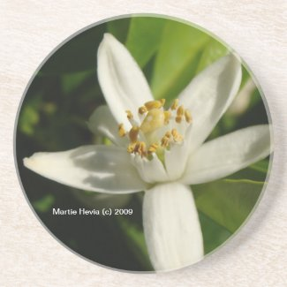 Orange Blossom - Coaster coaster