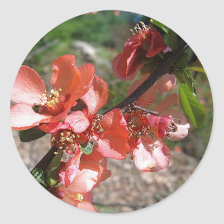 Orange Branch Round Stickers