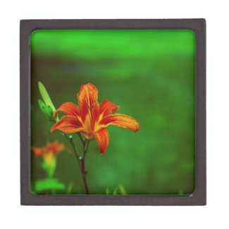 Orange Flower Lily Premium Trinket Boxes