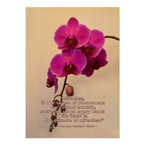 Orchids with Miracle Quote Poster
