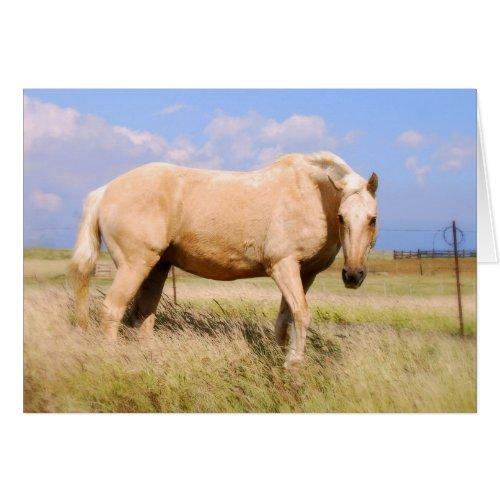Palomino Horse Card card